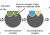 Diagram showing enzyme action