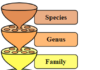 Diagram of hierarchical classification system