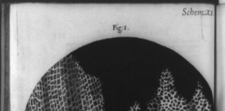 Engraving image of cork and honeycomb cells as seen by Robert Hooke