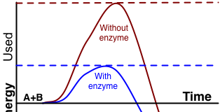 Diagram showing effect of enzyme on activation energy needed. The substrates are indicated as A+B and product as AB.