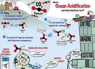Infographic on ocean acidification