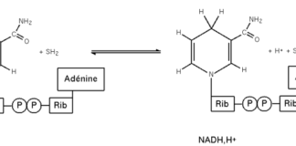 Diagram of the redox reaction of NAD+