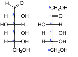 Diagram of glucose (left) and fructose (right) showing the arrangement of the atoms